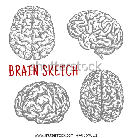 Brain sketch symbols with engraving illustrations of anatomically detailed human brain at different angles. Great for intellect and mind concept or t-shirt print design usage  - stock vector