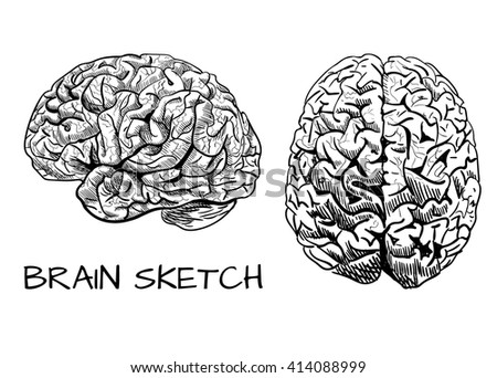 human brain drawing front view wwwpixsharkcom images