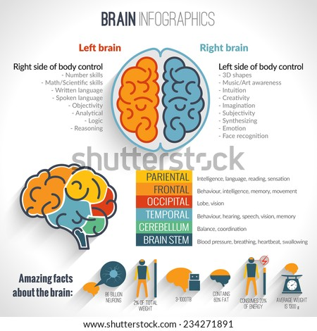 Brain structure left analytical and right creative hemispheres infographics set vector illustration - stock vector