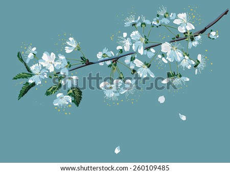 Branch of a blossom cherry tree on a blue background - stock vector