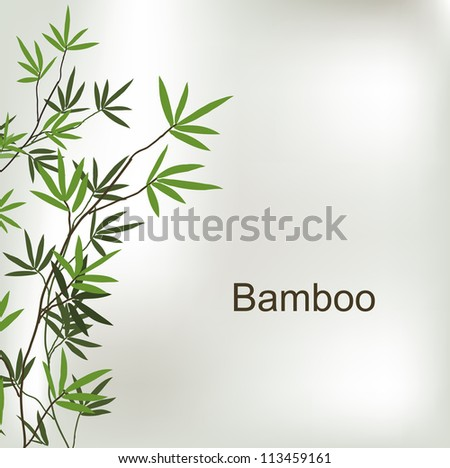 Branch of bamboo, vector background for design - stock vector