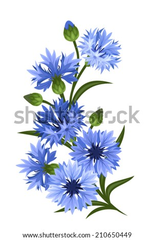 Branch of blue cornflowers. Vector illustration. - stock vector