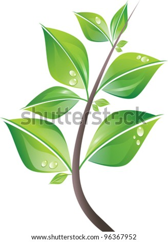 Branch of fresh green leaves with drops. Vector illustration. Isolated on white background