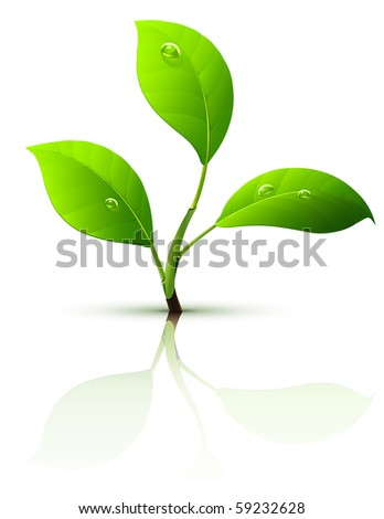 branch of sprout with green leaves and dew drops - stock vector