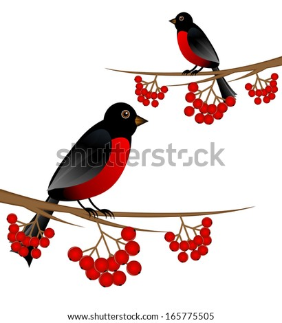 branch tree with berry wild ash and bird bullfinch, vector illustration