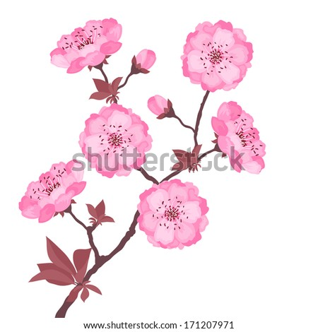 Branch with cherry blossoms on white background. - stock vector