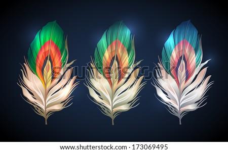 bright bird peacock feathers. set for design - stock vector