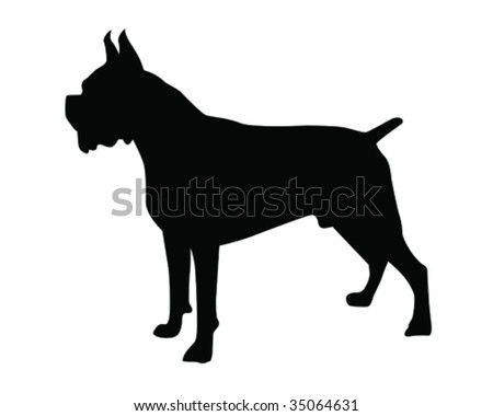 brindle boxer vector illustration