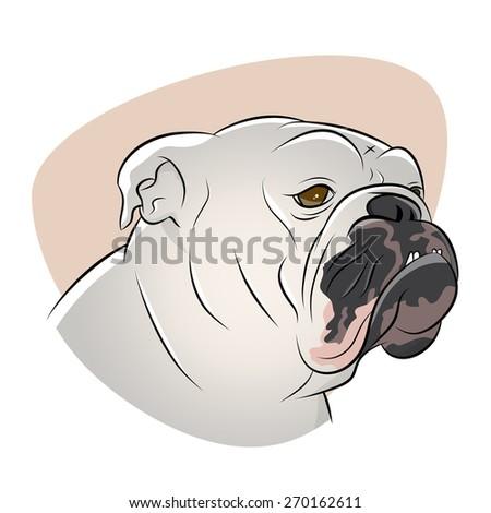 british bulldog illustration - stock vector
