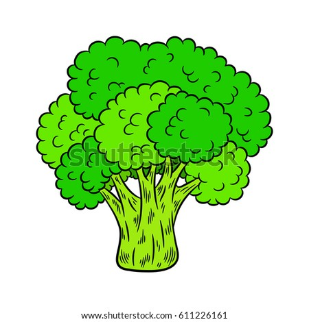 Brocolli Sketch Stock Images, Royalty-Free Images ...