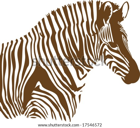 Brown and white Zebra on white background - stock vector