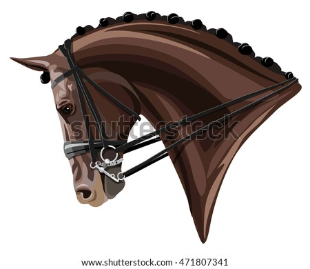 Brown Dressage Horse head on white background