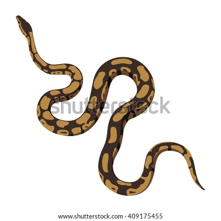 Brown python snake vector isolated on white background
