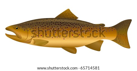 """Brown Trout (Salmo trutta) freshwater fish. """"Full compatible. Created with gradients."""" - stock vector"""