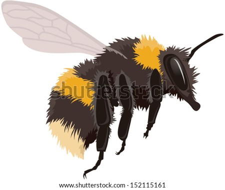 Bumble bee in flight, vector illustration isolated on white background. Fully adjustable and scaleable. - stock vector