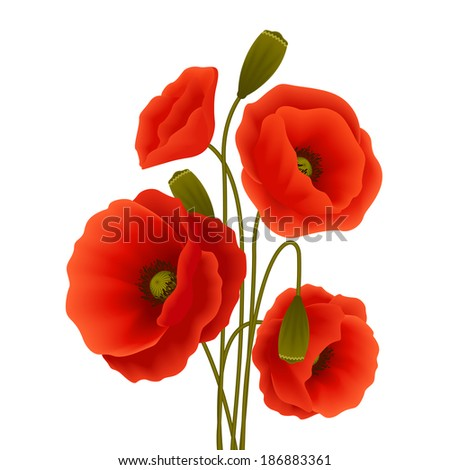 Bunch of red romantic blooming poppy flowers isolated vector illustration - stock vector