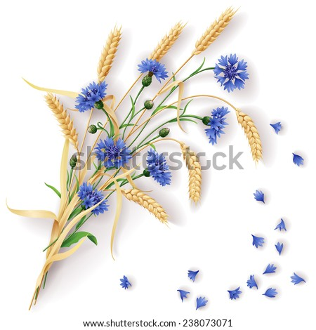 Bunch of wheat ears and blue cornflowers with scattered petals.  - stock vector