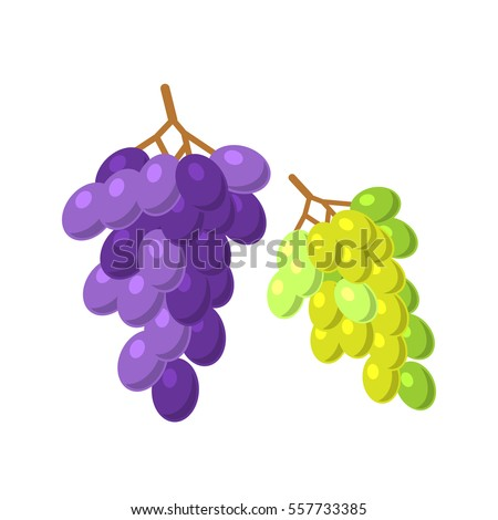 Bunches of grapes vector illustration.