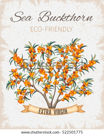Bush sea buckthorn poster. Vintage paper flyer for presentation. Vector illustration.