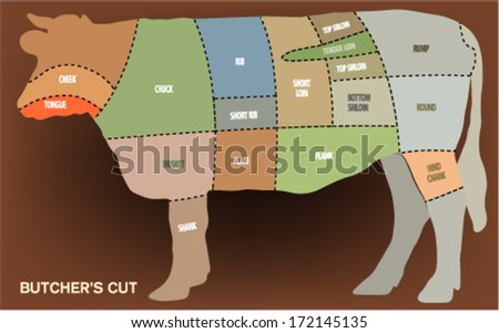 Butcher meat sections of cow (cuts of beef) - stock vector