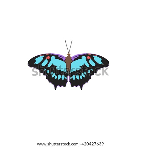 Butterfly blue pattern insect