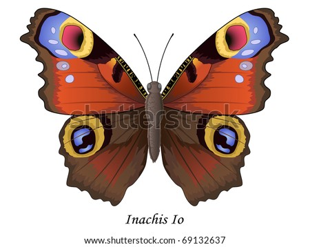Butterfly collection, Inachis Io, vector illustration. More butterflies in my portfolio. - stock vector