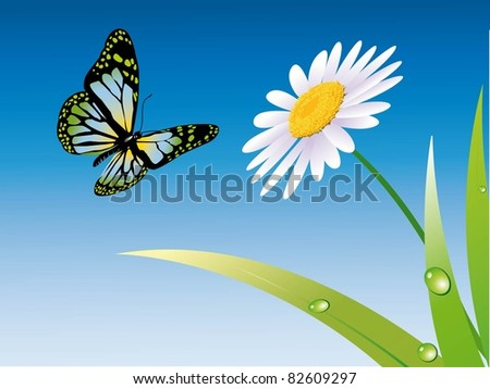 butterfly, daisies and grass