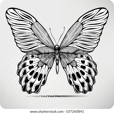 Butterfly, hand-drawing. Vector illustration. - stock vector