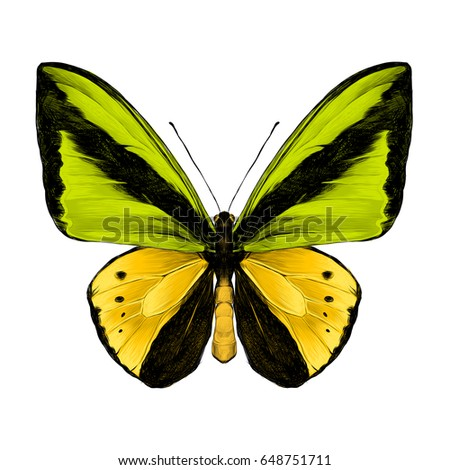 butterfly on yellow color - photo #38