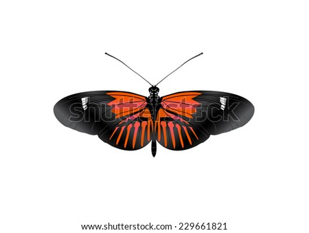 Butterfly - vector - stock vector