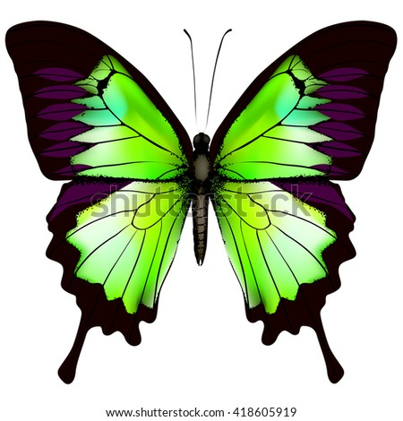 Butterfly. Vector illustration of beautiful green butterfly isolated on white background - stock vector