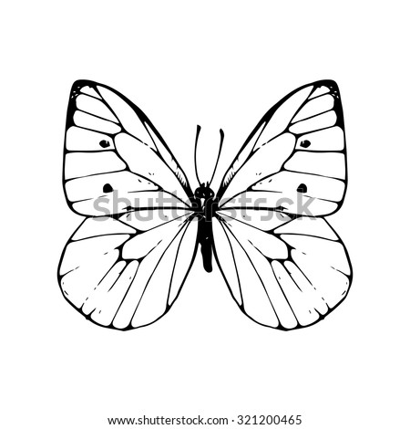 cabbage moth, hand drawn butterfly, black-veined white , line drawing vector element - stock vector