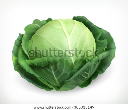Cabbage, vector object