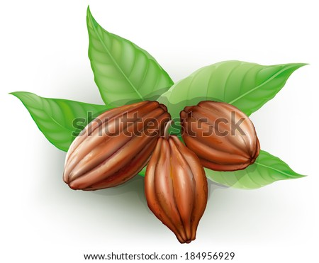 Cacao fruits and leaves on a white background - stock vector