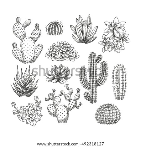 Cactus Collection Sketchy Style