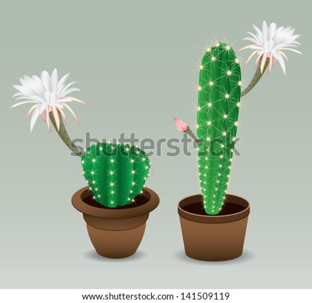 Cactus with flower - stock vector