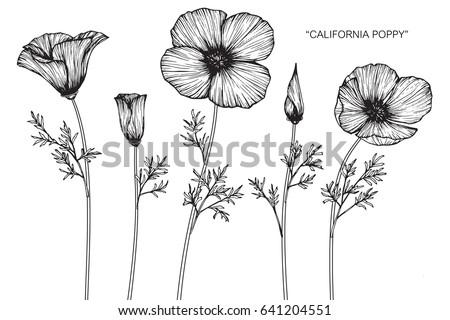 California poppy flowers drawn sketch lineart stock vector 641204551 california poppy flowers drawn and sketch with line art on white backgrounds mightylinksfo