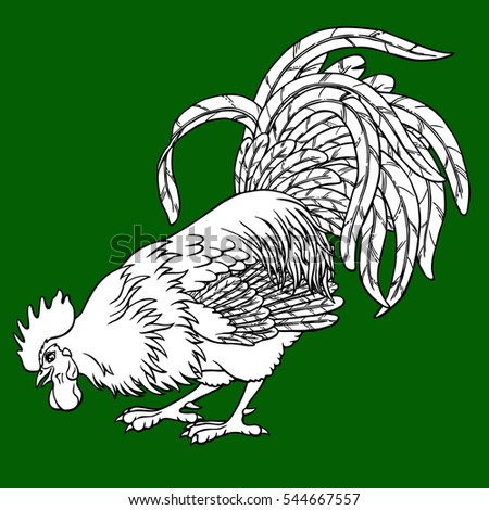 Calling Rooster Coloring On Green Background Decorative Chicken Monochrome Page Book A