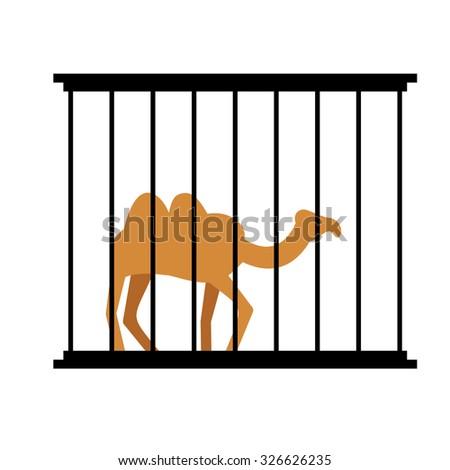 Camel in cage. Animal in Zoo behind bars. Desert wild animal in captivity. Beast people in captivity. - stock vector