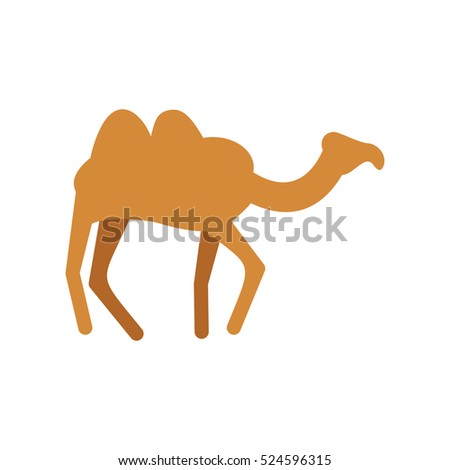 Camel isolated. Desert animals on white background