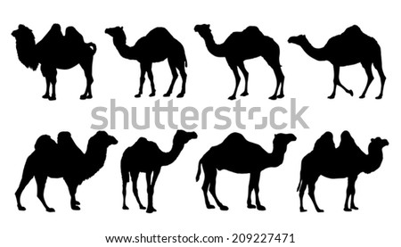 camel silhouettes on the white background - stock vector
