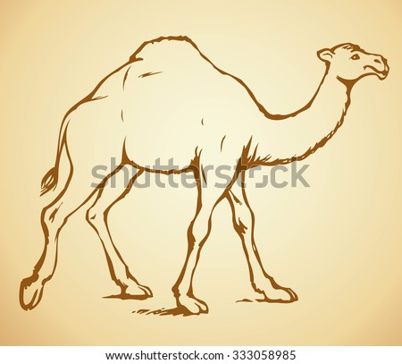 Camelus is herbivorous enduring mammal with hump on its back with reserve of fat. Vector monochrome freehand ink drawn background sketchy in art scribble ancient style pen on paper with space for text - stock vector