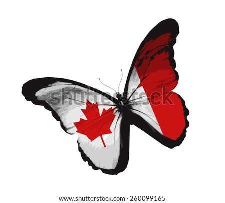 Canadian flag butterfly, isolated on white - stock vector