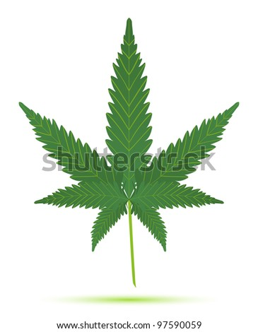 cannabis leaf isolated illustration - stock vector