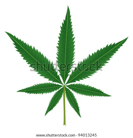 Cannabis leaf isolated over white background