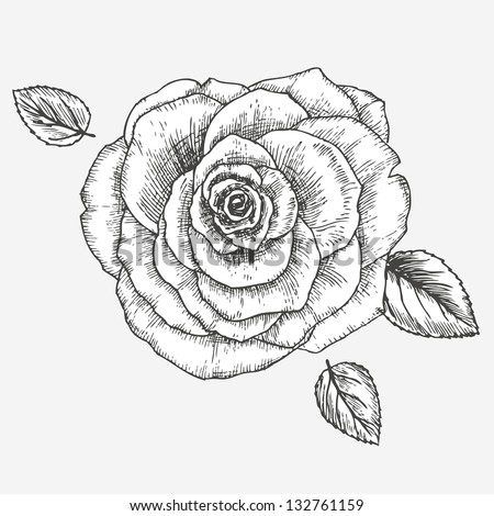 Card with rose flower - stock vector