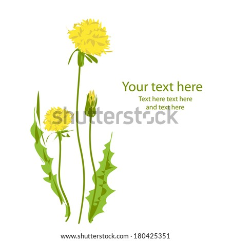Card with yellow dandelions isolated on white background.Vector - stock vector