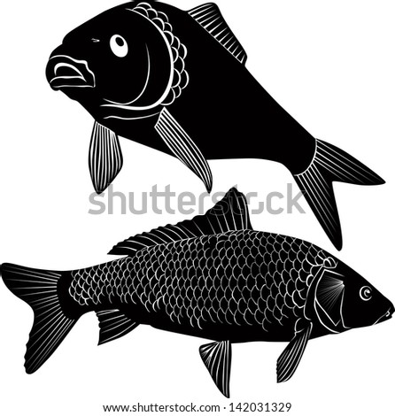 carp fish isolated on a white background - stock vector