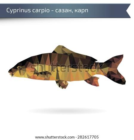 Carp fish vector illustration - stock vector