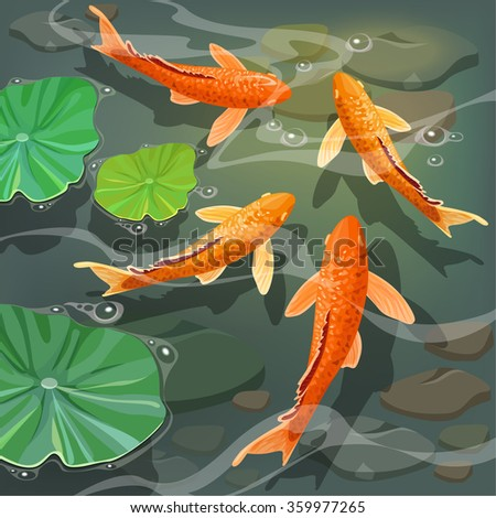 Carps Koi fish under water. Beautiful underwater view